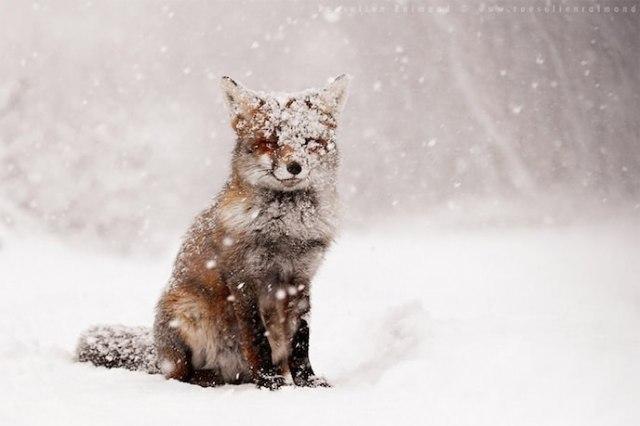 05animaux-neige