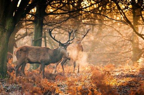 deer-antler-2048x1281-166393